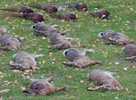 Jagt i Danmark med Jagtguiderne