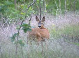 Her kan du tilmelde dig Jagtguidernes kurser og jagter